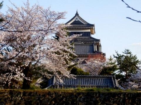 松本城夜桜 (21)