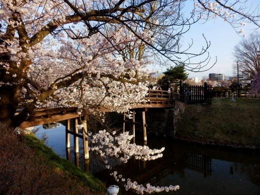 松本城夜桜 (31)