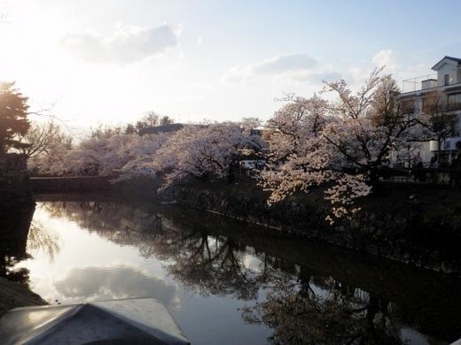 松本城夜桜 (35)