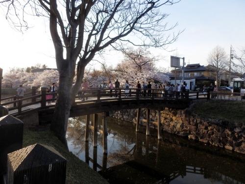 松本城夜桜 (38)
