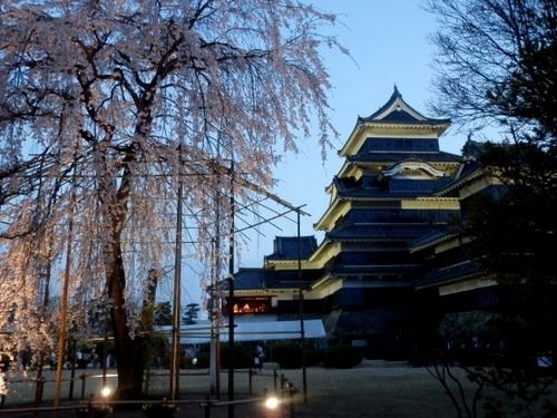 松本城夜桜 (50)