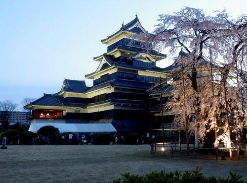 松本城夜桜 (51)