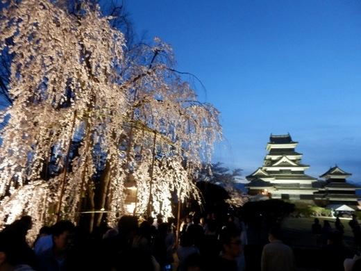 松本城夜桜 (56)