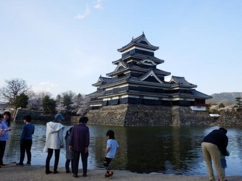 松本城夜桜 (5)