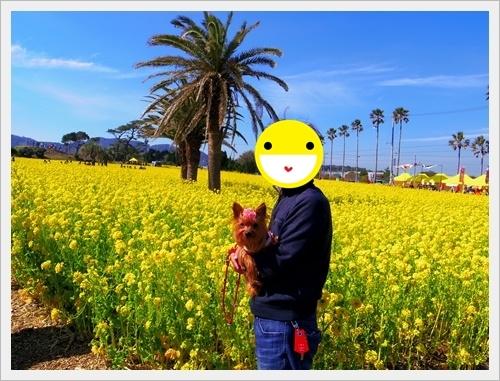 菜の花IMGP5749-20170304