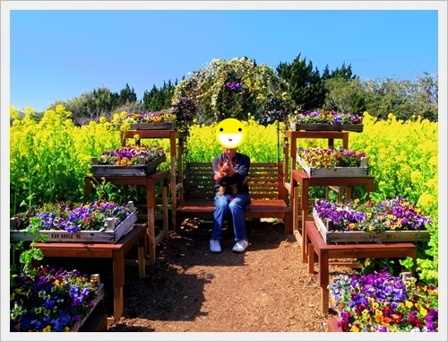 菜の花IMGP5755-20170304