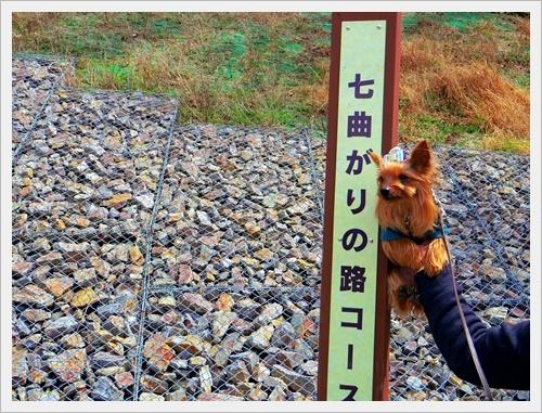 彼岸桜IMGP5981-20170402