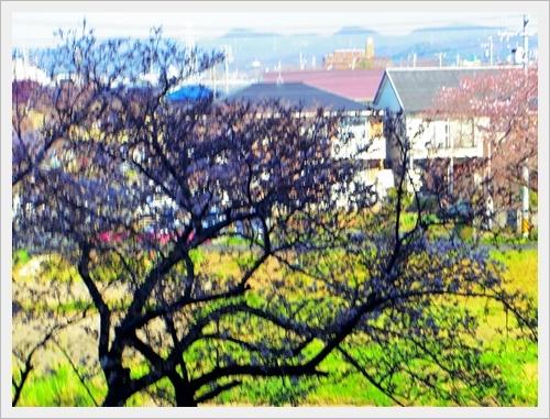 家の前の桜IMGP6000-20170404