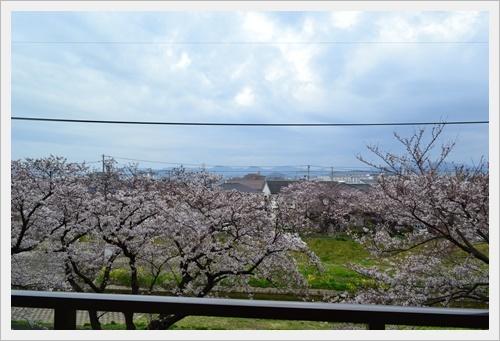家の前の桜DSC_0810-20170406