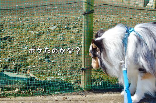 IMG_4319_20170215221612b0e.jpg