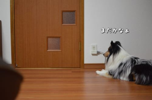 IMG_4815.jpg