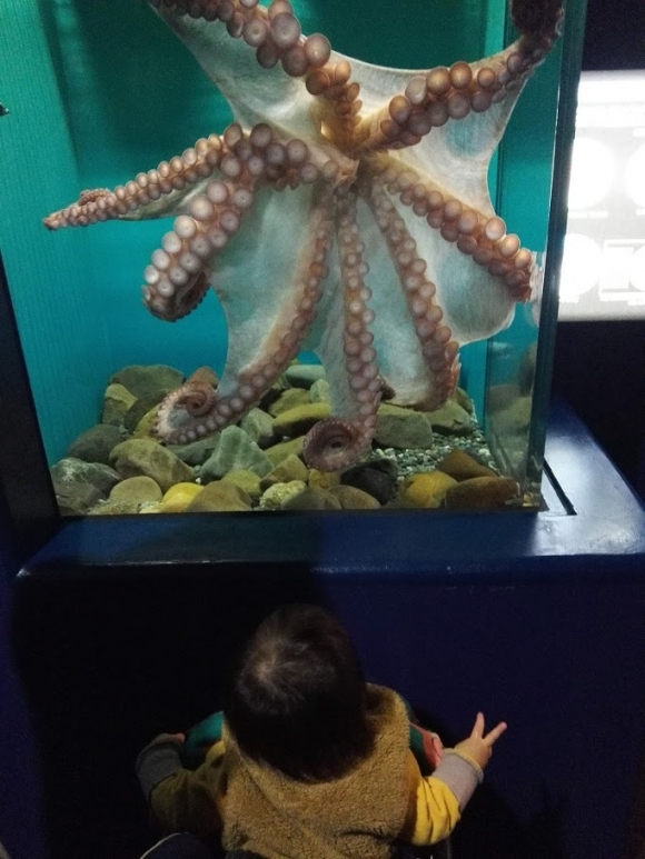 タコ ビックリ 赤ちゃん 大洗水族館