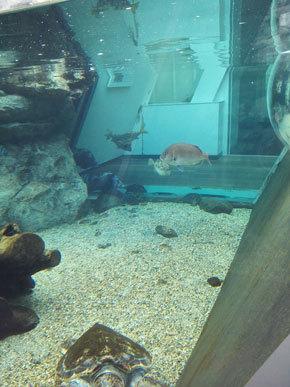 アクアマリンふくしま 小名浜 水族館