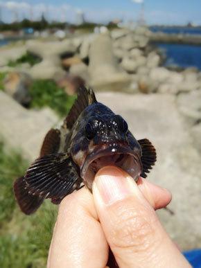 鹿島港 海 根魚 砂浜