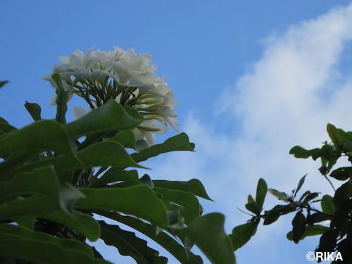 flowers7-29/12/16