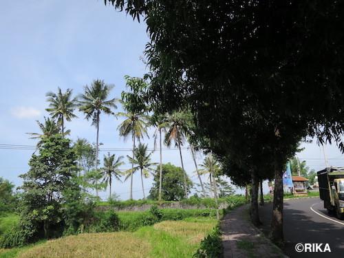 to bangli3-06/01/15