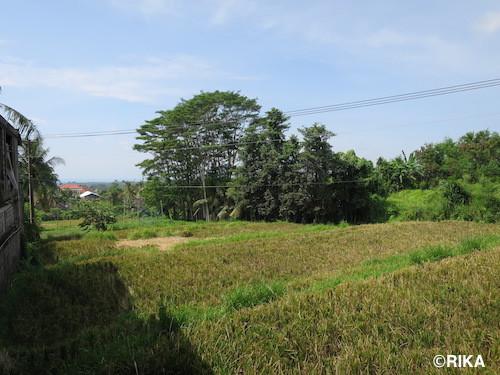 to bangli4-06/01/17