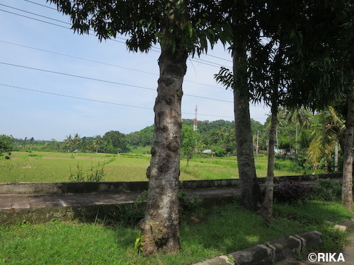 to bangli7-06/01/17