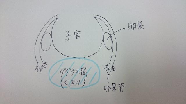 女性器の構造