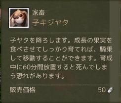 3月6日子キジヤタ