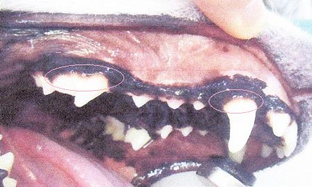 2017歯石除去9