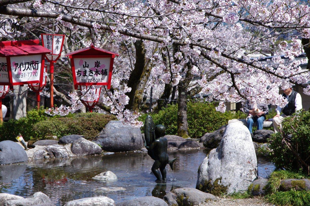 朝日山 桜 2
