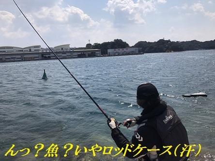 20170402_S__33939475.jpg