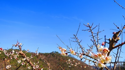 IMG_3674丸山