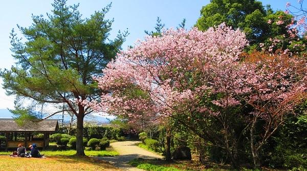 IMG_3816桜