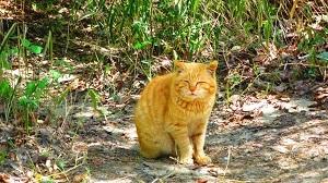 IMG_4079猫