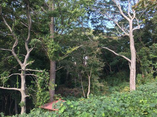 天明家の森