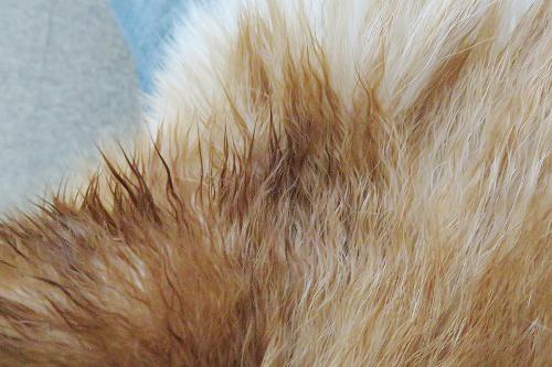 耳裏のチリチリ毛
