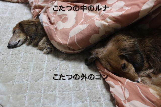 kako-fqzAtU46txsMqLjU.jpg