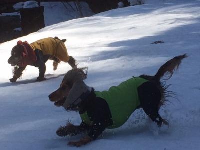 2回目雪遊び