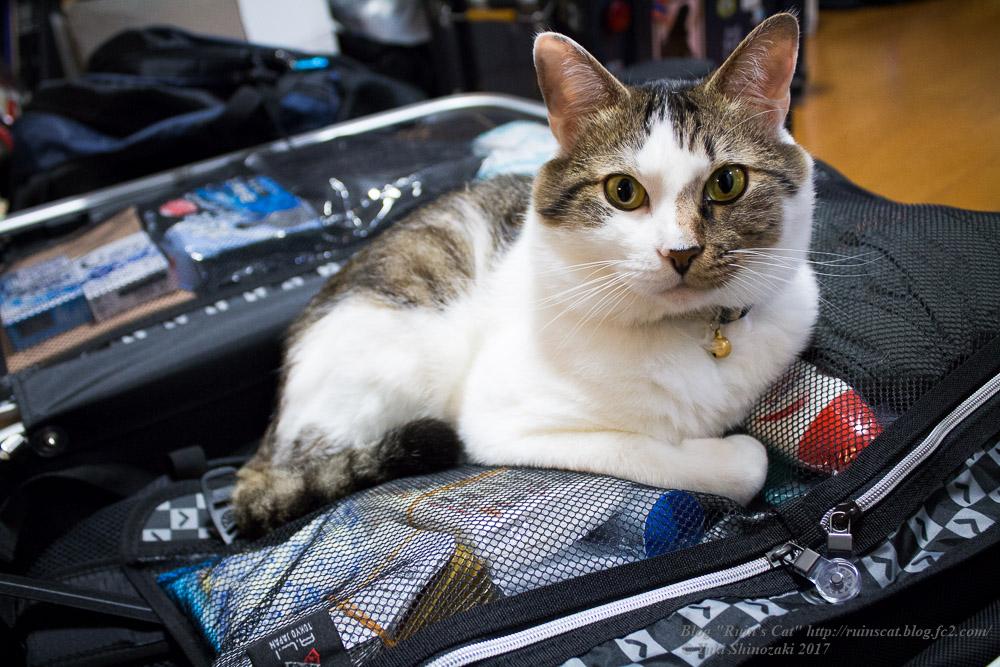 旅行かばんに紛れ込む猫