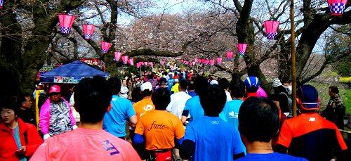 幸手市さくらマラソン-01
