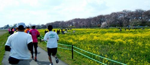 幸手市さくらマラソン-02