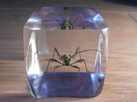 昆虫樹脂標本:キイロトラカミキリ3