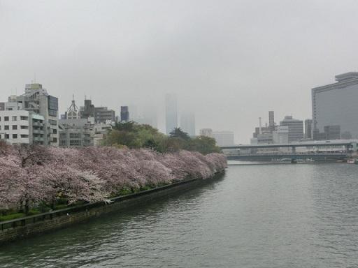 天満の桜3
