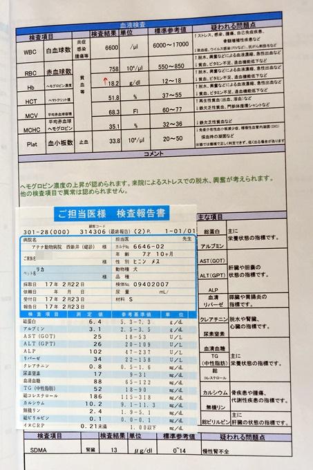 blogDSC_1055_20170406002846ab0.jpg
