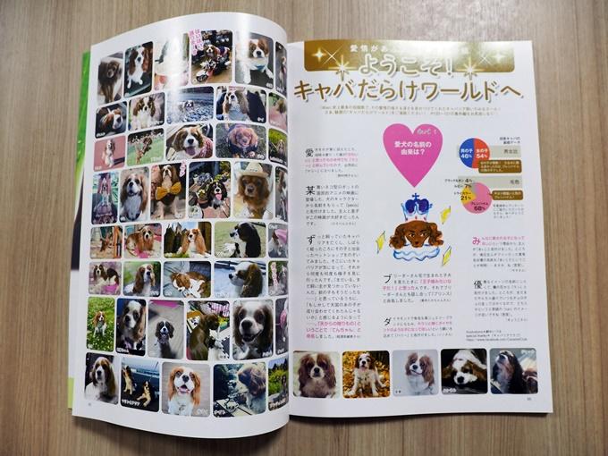 blogP4160876.jpg