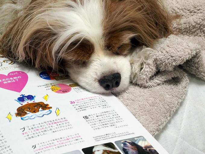 blogP4160895.jpg