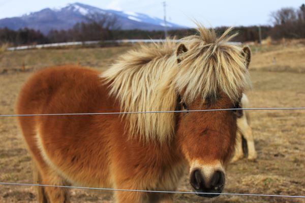 20170425_pony.jpg