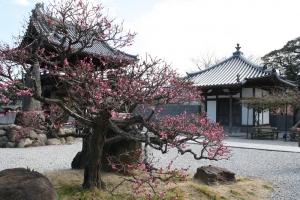 福成寺の花2