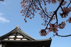 福成寺の花1