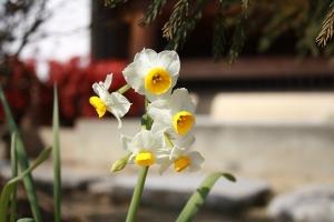福成寺の花3