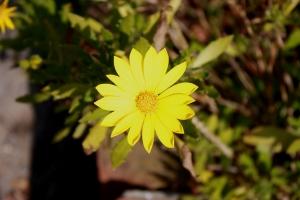 福成寺の花4