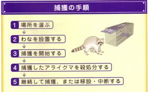 アライグマ捕獲技術プログラム2