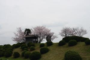 なんとか池の桜1