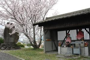 なんとか池の桜2